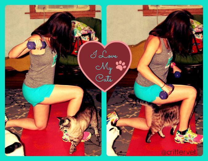 kittyweights